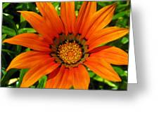 Orange Sunshine Greeting Card