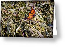Orange Swallowtail Greeting Card
