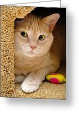 Orange Tabby Cat In Cat Condo Greeting Card