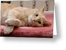 Orange Tabby Cat Lying Down Greeting Card by Amy Cicconi