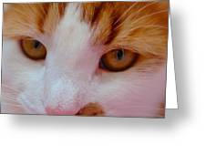 Orange Tabby Kitten Greeting Card