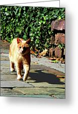 Orange Tabby Taking A Walk Greeting Card