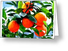 Orange Tree In Springtime  Greeting Card