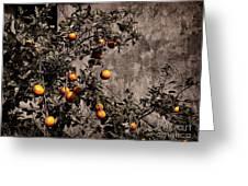 Orange Tree On Rustic Background Greeting Card