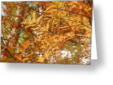 Orange Trees Greeting Card