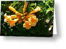 Orange Trumpets Greeting Card
