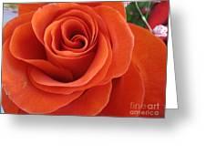 Orange Twist Rose 2 Greeting Card