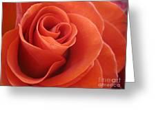 Orange Twist Rose 3 Greeting Card