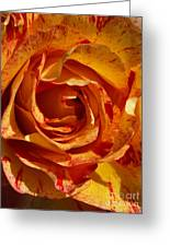 Orange Variegated Rose Greeting Card