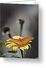 Orange Winged Butterfly Greeting Card