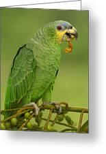 Orange-winged Parrot Amazonian Ecuador Greeting Card