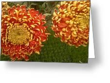 Orange-yellow Chrysanthemums Greeting Card