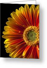 Orange Yellow Mum Close Up Greeting Card