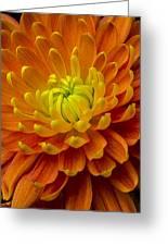 Orange Yellow Mum Greeting Card