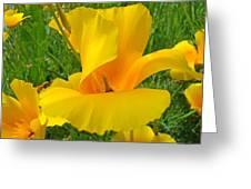 Orange Yellow Poppy Flower Art Print Greeting Card