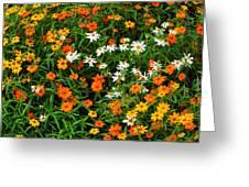 Orange Yellow White Daisies Greeting Card