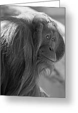 Orangutan Black And White Greeting Card