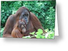 Orangutan Family Greeting Card