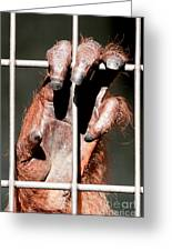 Orangutan Hand Close-up Greeting Card