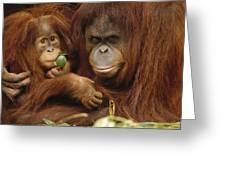 Orangutan Mother And Baby Greeting Card