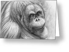 Orangutan - Pongo Pygmaeus Greeting Card