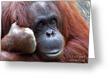 Orangutan Portrait Greeting Card