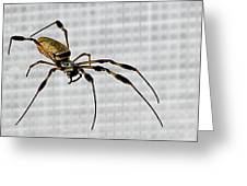 Orb Spider 4 Greeting Card