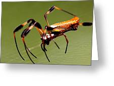 Orb Weaver - Coastal Spider Greeting Card