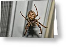 Orb Weaver Greeting Card by David Armstrong