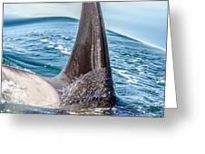 Orca Apex II Greeting Card