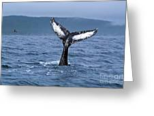 Orca Bitemarks On Humpback Tail Greeting Card