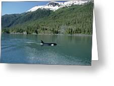Orca Female Inside Passage Alaska Greeting Card