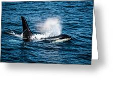 Orca Whale On The Move Greeting Card by Puget  Exposure