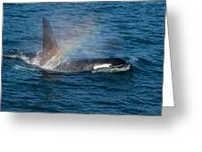 Orca Whale Surfacing Greeting Card