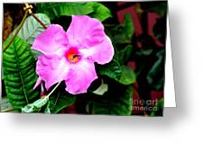 Orchard Colored Mandevilla Greeting Card