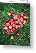 Orchard Fresh Picked Apples Greeting Card