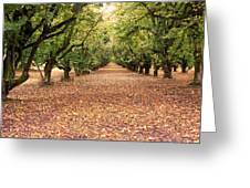 Orchard In The Morning Greeting Card