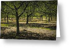 Orchard In West Michigan No. 279 Greeting Card