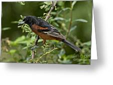 Orchard Oriole Male Greeting Card