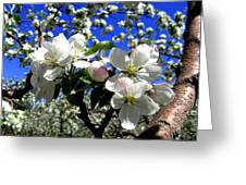 Orchard Ovation Greeting Card