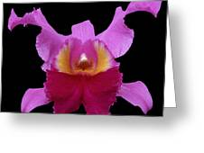 Orchid 002 Greeting Card