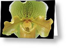 Orchid 003 Greeting Card