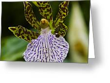 Orchid 11 Greeting Card