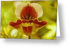 Orchid 124 Greeting Card