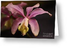 Orchid 133 Greeting Card