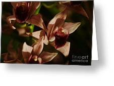 Orchid 137 Greeting Card