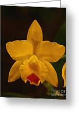 Orchid 139 Greeting Card