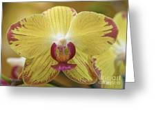 Orchid 141 Greeting Card