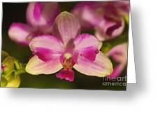 Orchid 144 Greeting Card