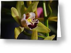 Orchid 148 Greeting Card